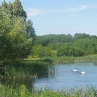 Teich An Warnsdorf 4