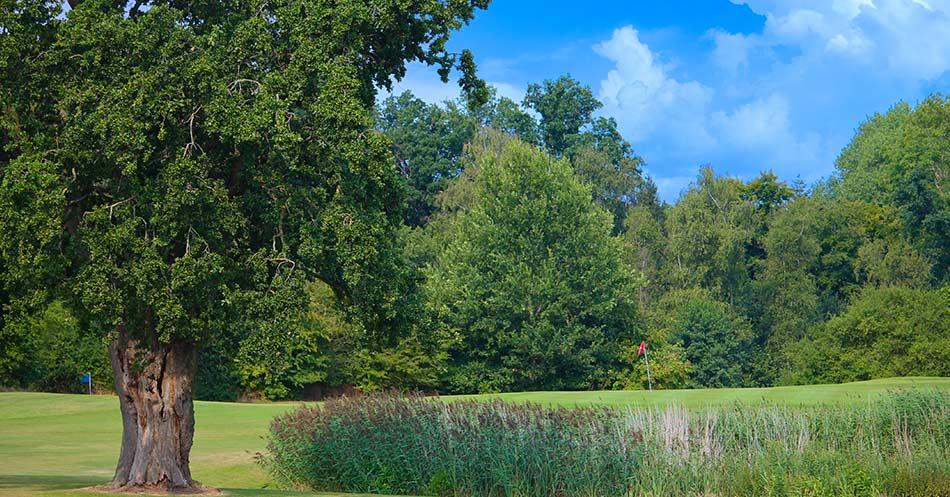 Blick über Einen Teich Auf Das Grün Von See 1