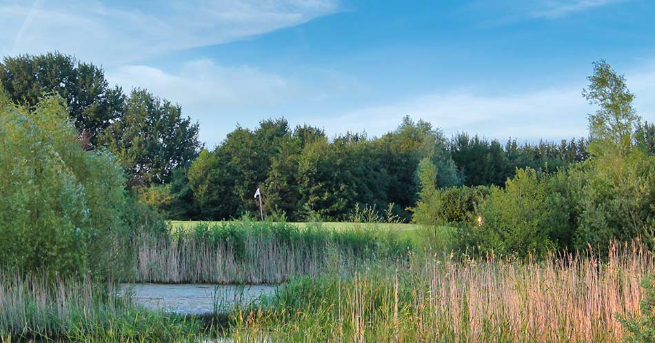 Blick über Einen Teich Auf Das Grün Warnsdorf 3